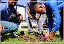 حملة لزراعة النباتات و شتلات الورود